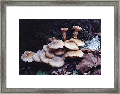 To Be Different Framed Print by Jan Amiss Photography