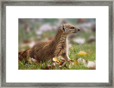 To Close For Your Own Safety Framed Print by Adelita Rog