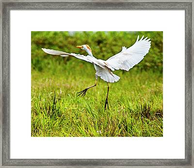 To Greener Pastures Framed Print by Norman Johnson