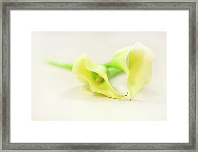 To Have And To Hold... Framed Print by Evelina Kremsdorf