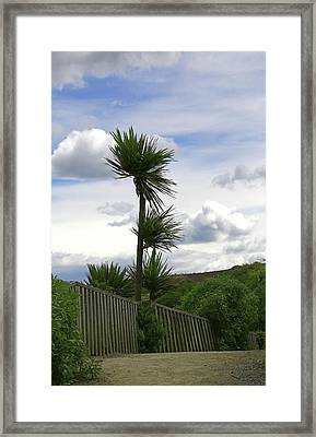 Framed Print featuring the photograph To Kouka Cabbage Tree by Nareeta Martin