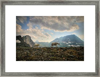 To Lead And Follow Framed Print