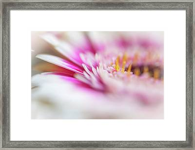 Framed Print featuring the photograph To Live In Dream 1. Macro Gerbera by Jenny Rainbow