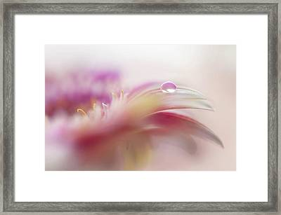 Framed Print featuring the photograph To Live In Dream 2. Macro Gerbera by Jenny Rainbow
