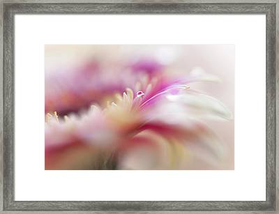 Framed Print featuring the photograph To Live In Dream 3. Macro Gerbera by Jenny Rainbow