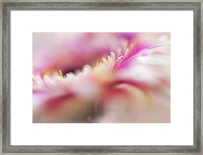 Framed Print featuring the photograph To Live In Dream 5. Macro Gerbera by Jenny Rainbow