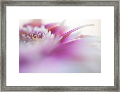Framed Print featuring the photograph To Live In Dream. Macro Gerbera by Jenny Rainbow