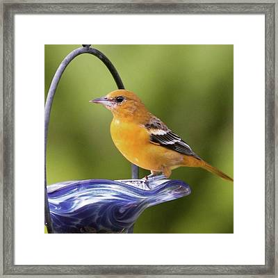 To Remind Us Of Summer, A Juvenile Framed Print by Heidi Hermes