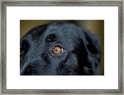 To See In Her Eyes Framed Print by Richard Booth
