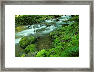 To Sit And Watch Framed Print by Jeff Swan