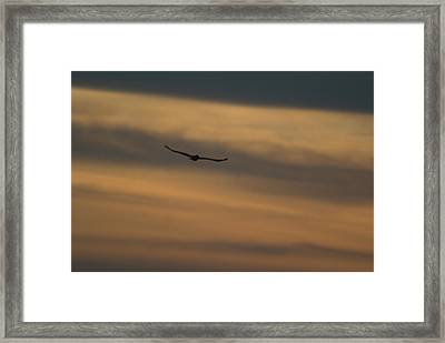 To Soar - Free Framed Print by Douglas Barnett