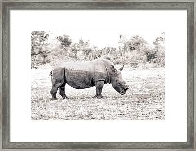 To Survive Framed Print by Juergen Klust