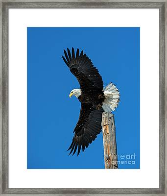To The Air Framed Print by Mike Dawson