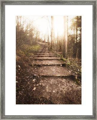 To The Light Framed Print by Wim Lanclus