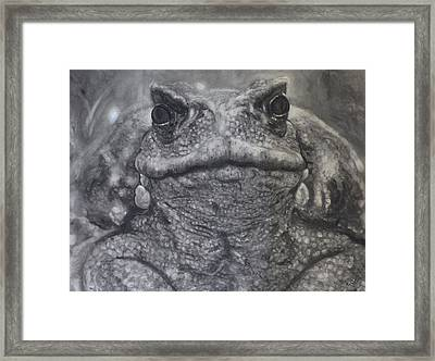 Toad Framed Print by Adrienne Martino
