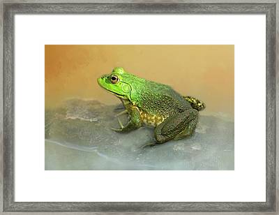 Toad-ally Cute Framed Print
