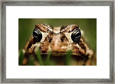 Toad In The Grass Framed Print by  Onyonet  Photo Studios