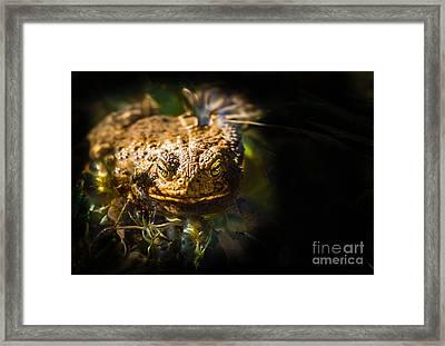 Toad Portrait Framed Print