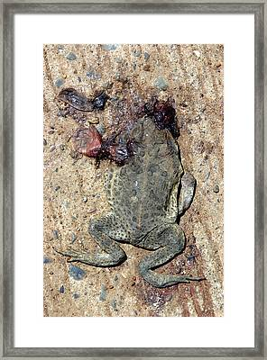 Toad Road 3 Framed Print by Jez C Self