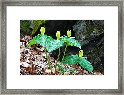 Toad Shade Trillium Framed Print