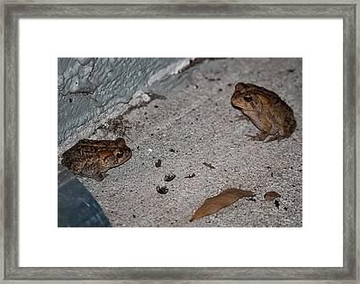 Toad Talk Framed Print