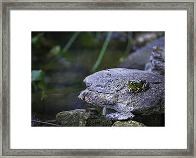 Toading It Up Framed Print