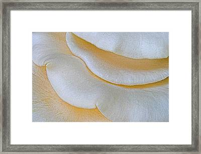 Toadstool-1- St Lucia Framed Print by Chester Williams