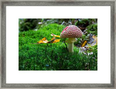Toadstool Framed Print by Andreas Levi