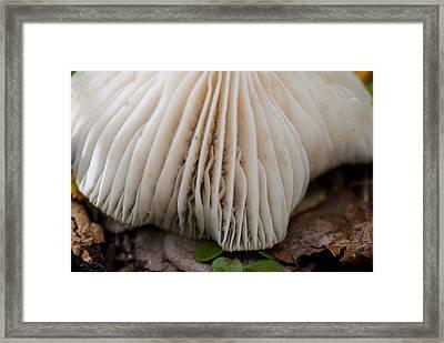 Toadstool Framed Print by Lisa Knechtel