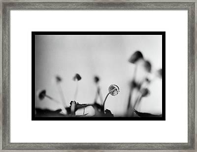 Toadstool - Macro Framed Print