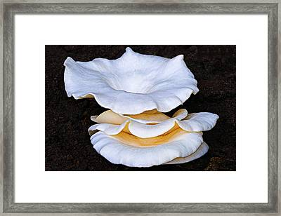 Toadstools 2-st Lucia Framed Print by Chester Williams