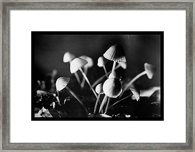 Toadstools Framed Print by Dirk Ercken