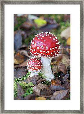 Toadstools In The Woods Vi Framed Print