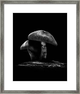 Toadstools On A Toronto Trail No 6 Framed Print