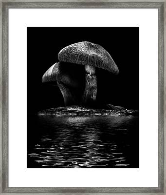 Framed Print featuring the photograph Toadstools On A Toronto Trail Reflection 6 by Brian Carson