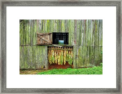 Tobacco Barn Framed Print by Ron Morecraft