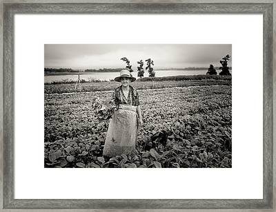 Tobacco Farm Framed Print