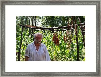 Tobacco Farmer Framed Print by Jean Haynes