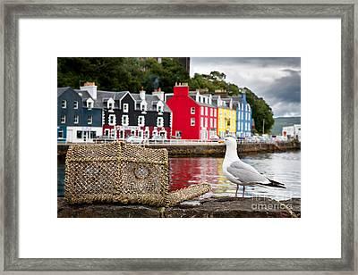 Tobermory Seagull Framed Print