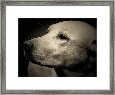 Tobie Portrait  Framed Print