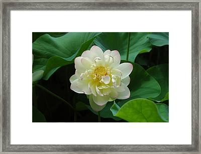 Framed Print featuring the photograph Tobin Series The Water Lillys by Kicking Bear  Productions