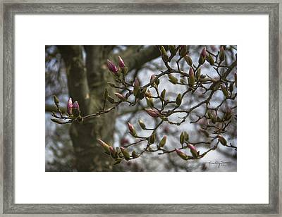 Today The World Is New Again Framed Print by Karen Casey-Smith
