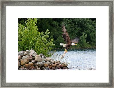 Today's Catch Framed Print by Brook Burling