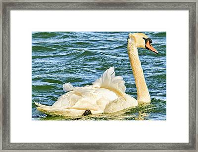 Today's Forecast - Windy And Freezing Cold Framed Print by Geraldine Scull