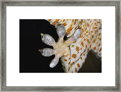 Toe Pads Of Tokay Gecko, Note Scales Framed Print