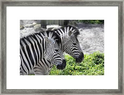 Together Framed Print by Keith Lovejoy