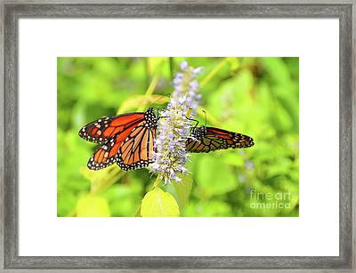 Together We Can Fly So High Framed Print