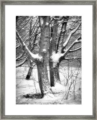 Together Framed Print by Wim Lanclus