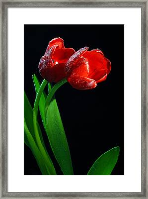 Togetherness Framed Print by Dung Ma