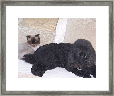 Togetherness Framed Print by George Pasini
